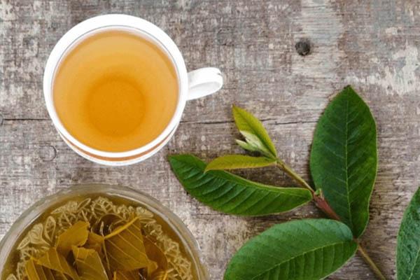 trà lá ổi và mật ong trị chàm